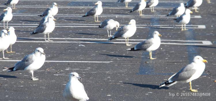海鷗的停車場