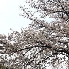 Yeouidong Avenue User Photo