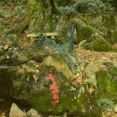 海洋銀杏林用戶圖片