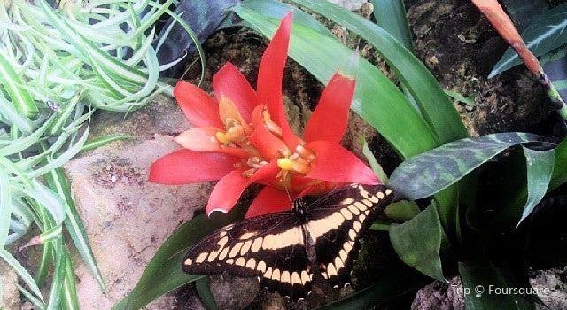 La Serre aux Papillons2