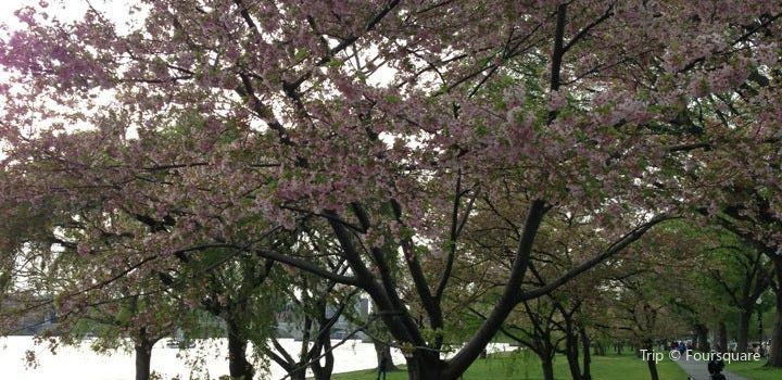 West Potomac Park3