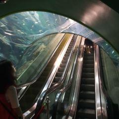 上海海洋水族館用戶圖片