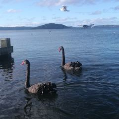 Rotorua Duck Tours User Photo