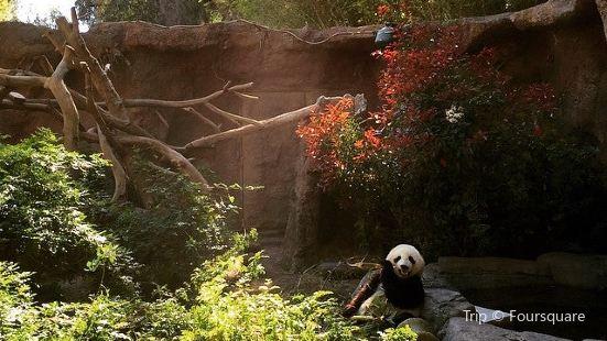 Giant Panda Research Station