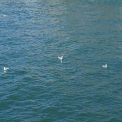 天使島用戶圖片
