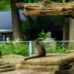 Copenhagen Zoo User Photo
