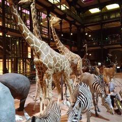 進化大陳列館のユーザー投稿写真