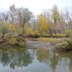 樺林公園用戶圖片
