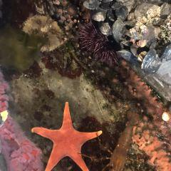 謝德水族館 用戶圖片