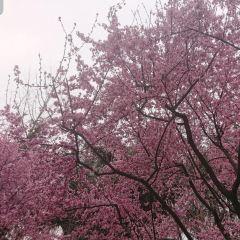 홍산 공원 여행 사진