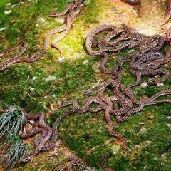 뱀 섬 여행 사진