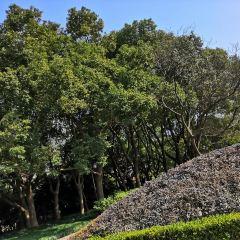 Jiaotong Park User Photo