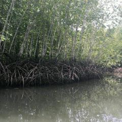 Mangrove Ecological Reserve User Photo
