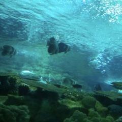 Fuguo Sea World User Photo