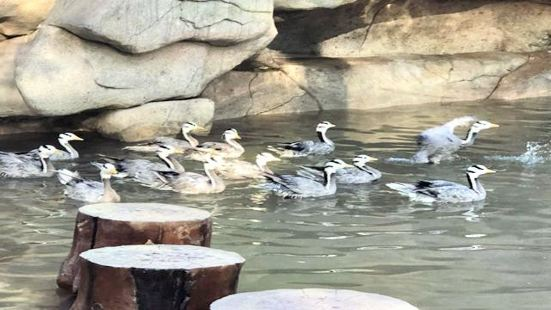 East Lake Ocean Amusement Park Flying Bird World