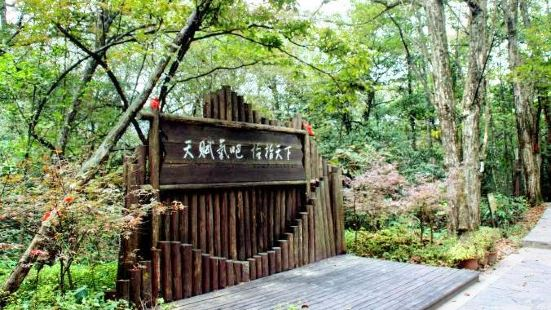 雞公山原始森林