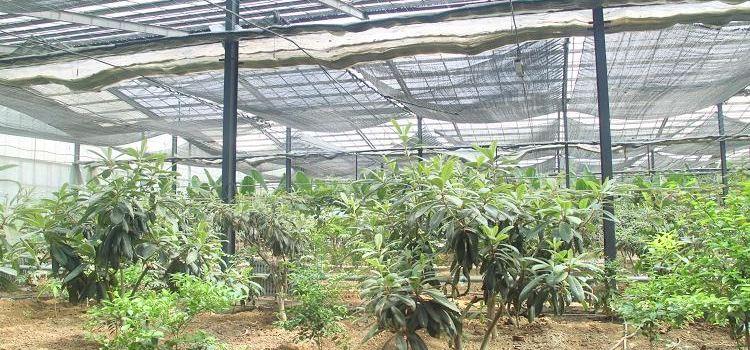 Ulugu Tropical Botanical Garden