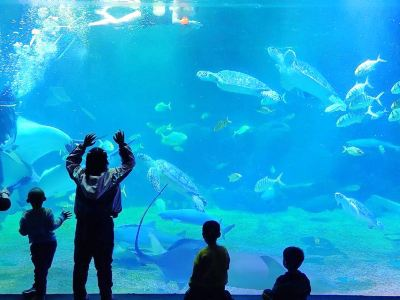 Shijiazhuang Sea World