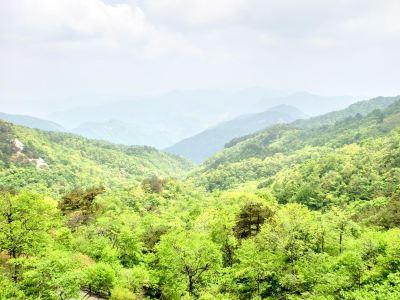 Turtle Peak Mountain