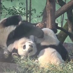 上海動物園のユーザー投稿写真
