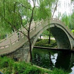 Purple Bamboo Park User Photo