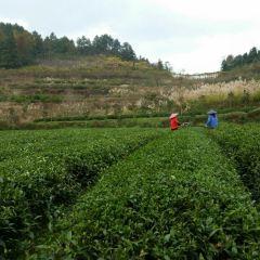 Erlong Tea Farm User Photo