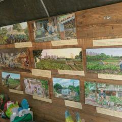 Mapopo Community Farm User Photo