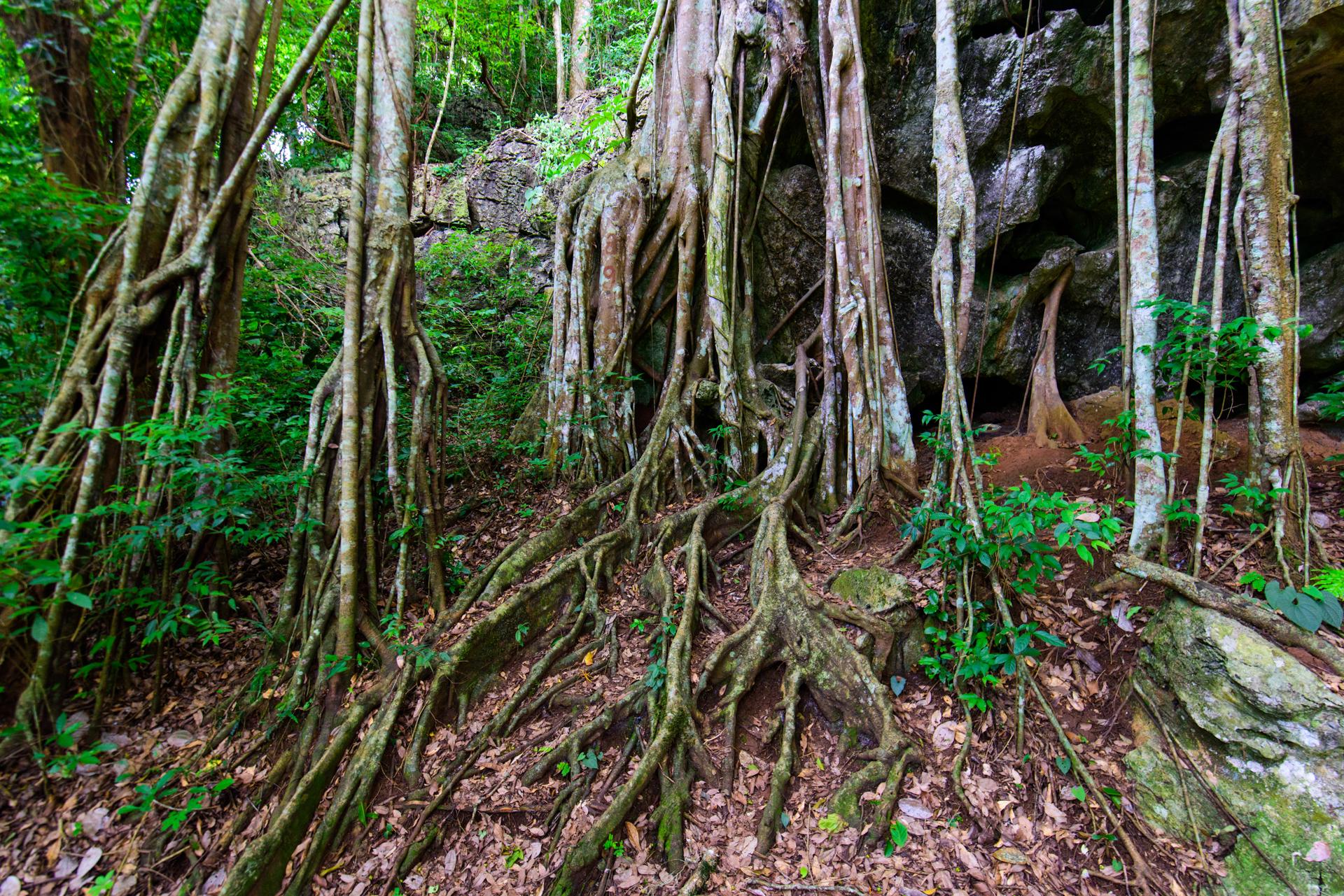 시솽반나 원시삼림공원(서쌍판납 원시삼림공원)