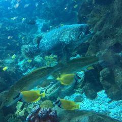 Guangzhou Ocean Aquarium User Photo