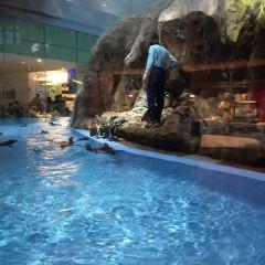 長隆企鵝酒店帝企鵝自助餐廳用戶圖片