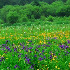 Alpine Garden User Photo