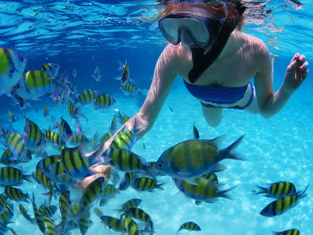 ピピ諸島でのダイビング