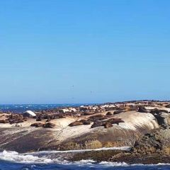 Duiker Island User Photo