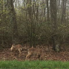 Shenandoah national park User Photo
