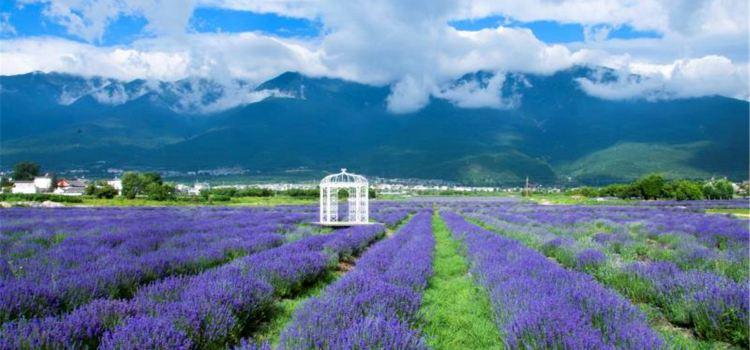 Yunhai Fangcao Flower Garden Expo Park1