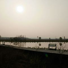 新青國家濕地公園用戶圖片