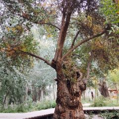 金湖楊國家森林公園用戶圖片