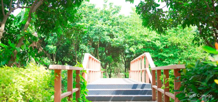 Yingzhou Ecological Park1