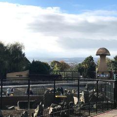 Edinburgh Zoo User Photo