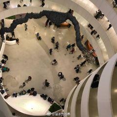 古根海姆博物館用戶圖片