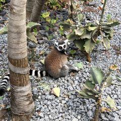Melbourne Zoo User Photo