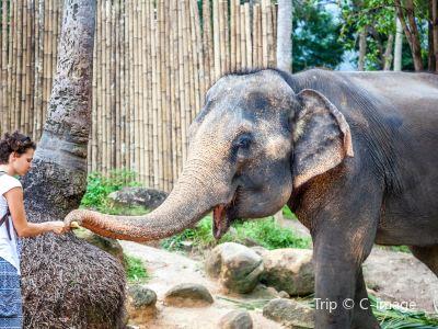 Meiwang Elephant Camp