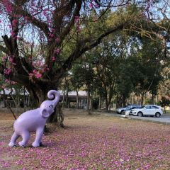 Chiang Mai University User Photo
