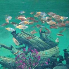 常州金鷹海洋世界用戶圖片