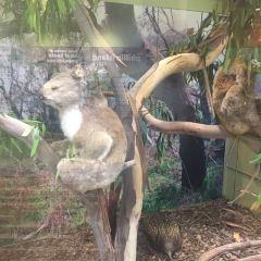 koala conservation centre User Photo