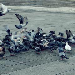 自由廣場用戶圖片