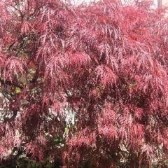 英國花園用戶圖片