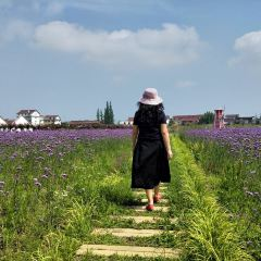 Hanzhong Lavender Garden User Photo