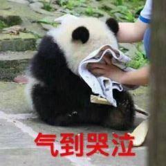 Cangzhou Zoo User Photo