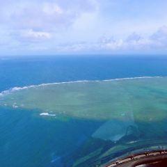帶狀礁史蒂夫軟珊瑚群用戶圖片